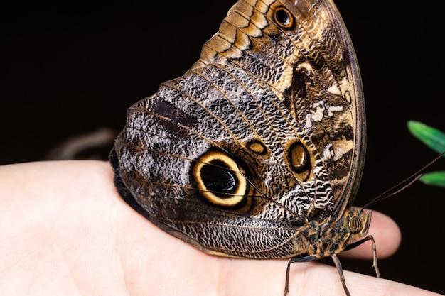 Motyl na dłoni w ciemności
