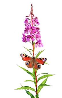 Motyl na kwiacie na białym tle