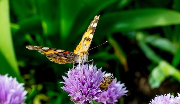 Motyl na kwiat koniczyny w słoneczną pogodę