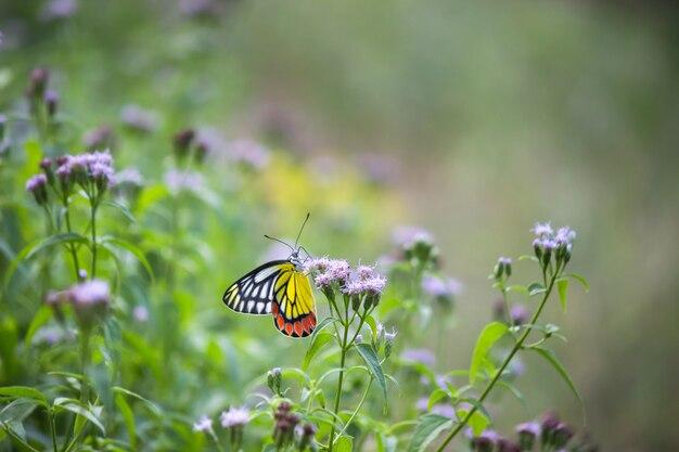 Motyl na kwiat roślinach