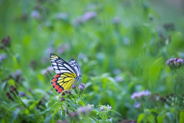 Motyl na kwiat roślinie