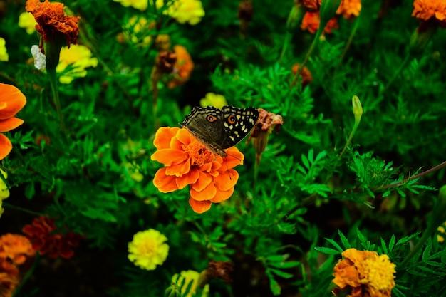 Motyl na kwiatach w ogrodzie.