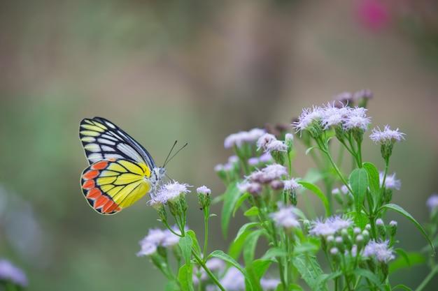 Motyl na kwiatach