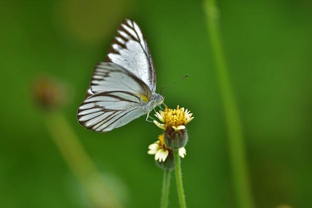 Motyl na kwiatek na łące, wiosną makro.