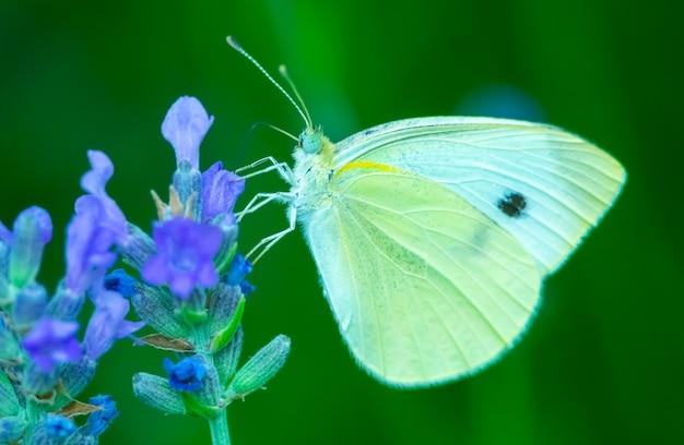 Motyl na kwiatku letnia łąka z makro natury