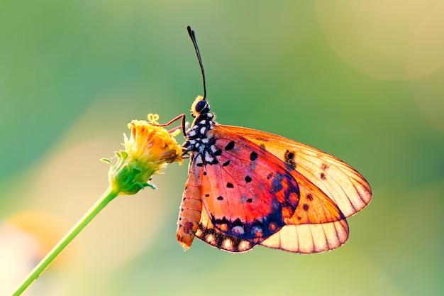 Motyl na kwiatku