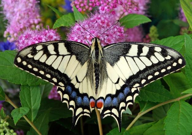Motyl na kwitnącej łące