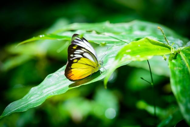 Motyl na liściu w lesie