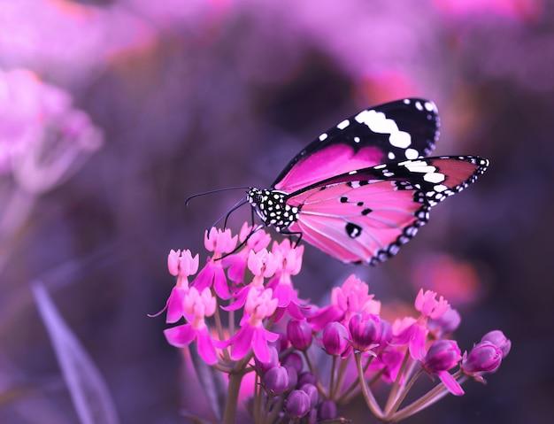 Motyl na pomarańczowym kwiacie w ogródzie