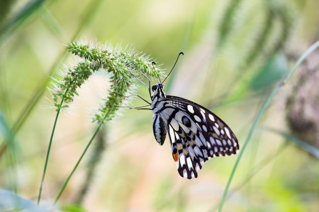 Motyl na roślinach