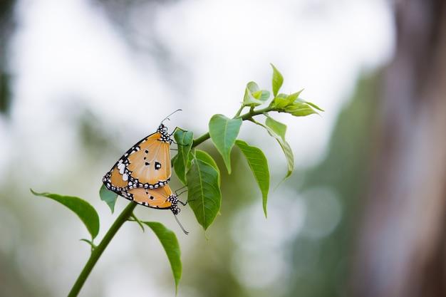 Motyl na roślinie kwiatowej