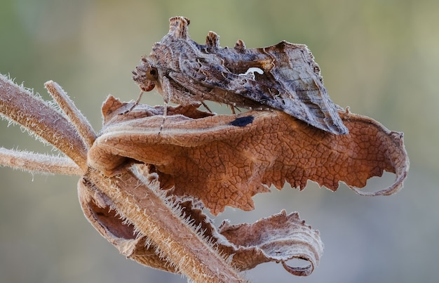 Motyl na roślinie