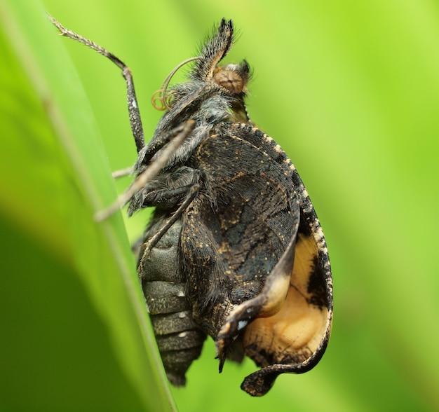Motyl na rozmytym zielonym liściu