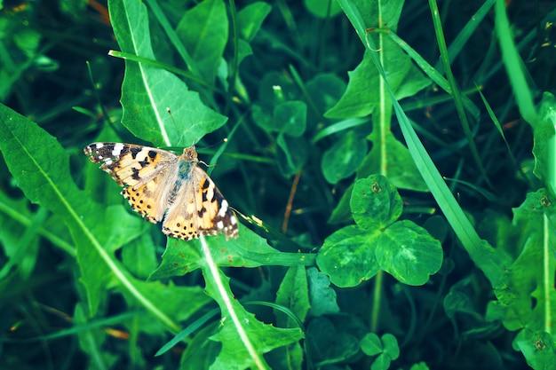 Motyl na trawie.