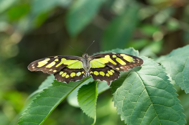 Motyl na urlopie, tło natura