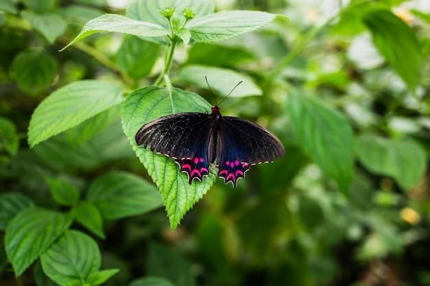 Motyl na zielonym liściu