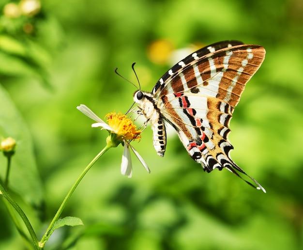 Motyl na żółtym kwiecie w ogrodzie