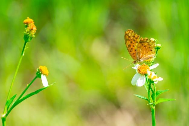 Motyl na żółtym pyłku kwiatowym.