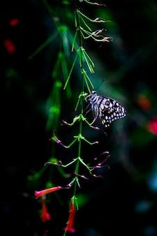 Motyl papilio lub motyl lipowy odpoczywający lub wiszący na roślinie kwiatowej w miękkim tle