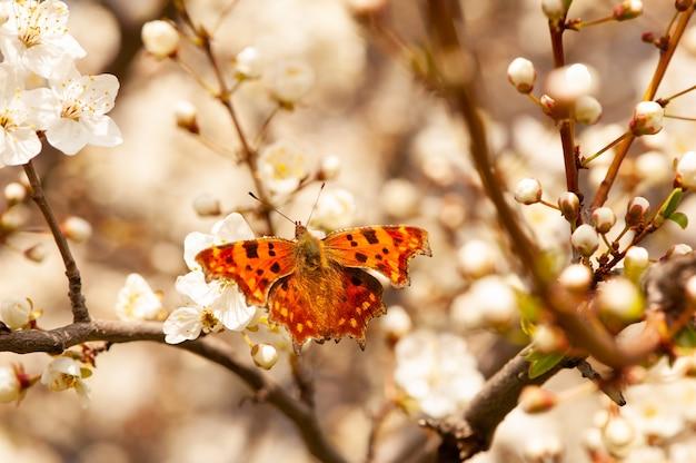 Motyl siedzi na gałęzi kwitnącego drzewa.