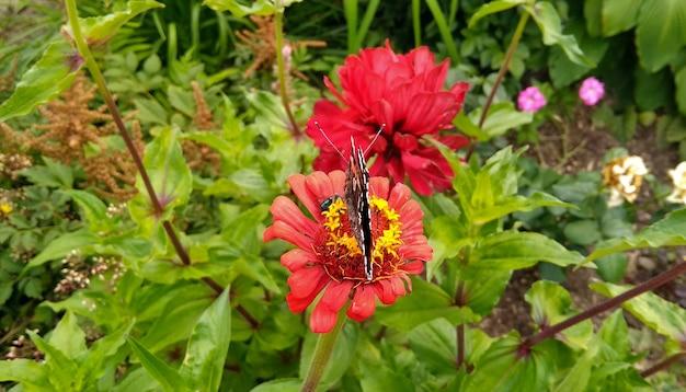Motyl siedzi na kwiatku w ogrodzie