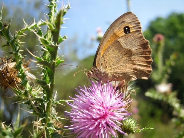 Motyl siedzi na kwiatku