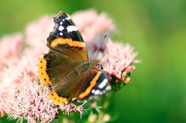 Motyl w pobliżu