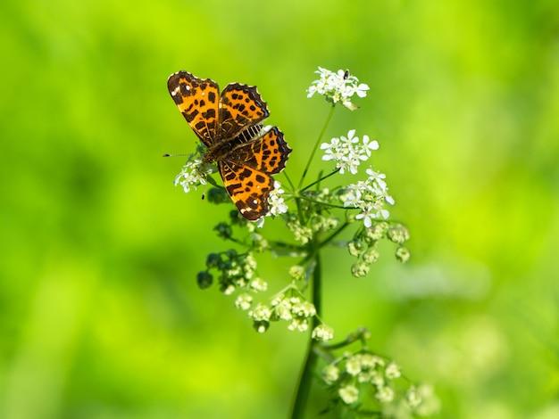 Motyl w świetle słonecznym na kwiacie