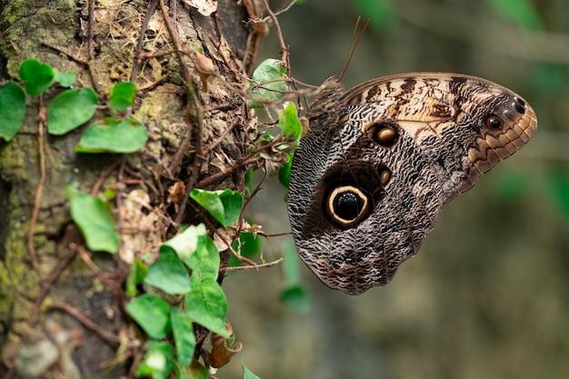 Motyl z zamkniętymi skrzydłami umieszczającymi na pniu drzewa