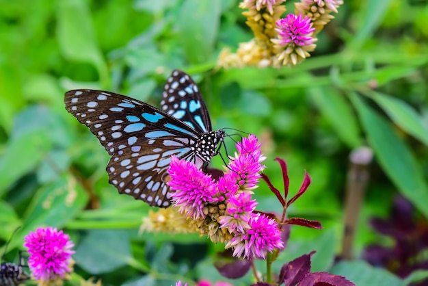 Motyle latają na kwiatowe wyspy pośród natury.