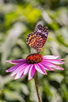 Motyle na kwiatach i świetle słonecznym