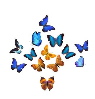Motyle. owady tropikalne. na białym tle. szablon projektu