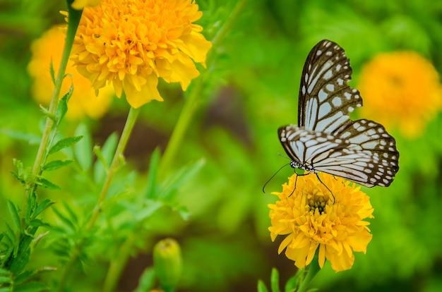 Motyle szukają kwiatów.