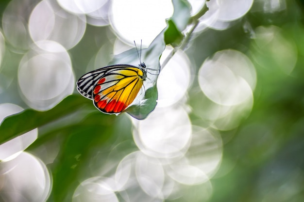 Motyle umieszczają na liść zieleni i bokeh naturze