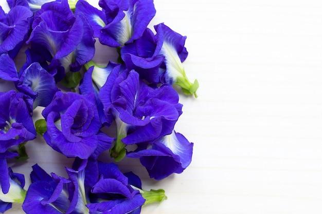 Motyli groch lub błękitnego grochu kwiat na białym drewnianym tle.
