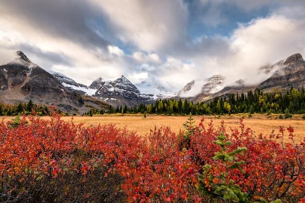 Mount assiniboine z czerwoną rośliną i pochmurno na złotej łące w provincial park