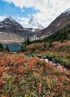 Mount assiniboine z jeziorem magog w jesiennym lesie w prowincjonalnym parku