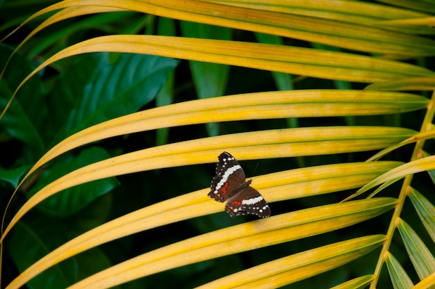 Mountain pine ridge reserve, motyl na liściu