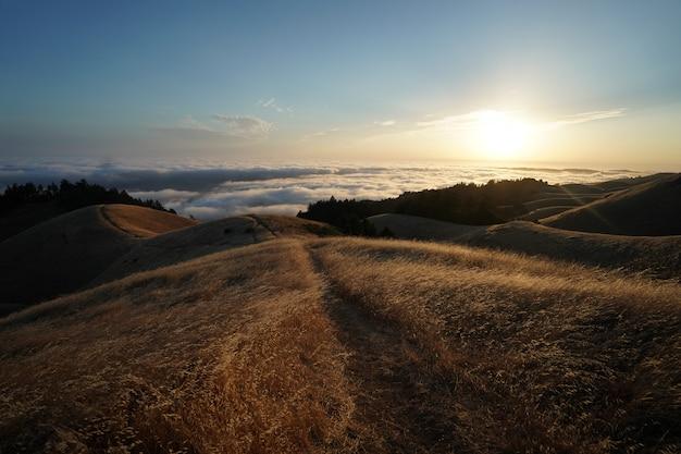 Mountain tam w marin ca pokrywa w polu suchej trawy z widoczną linią horyzontu