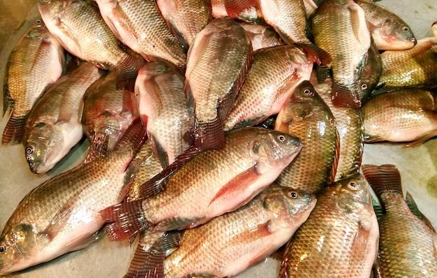 Mozambik tilapia ryba z azji południowej