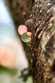 Mrówka niosąca liście na drzewie