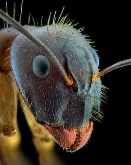 Mrówka twarz makro