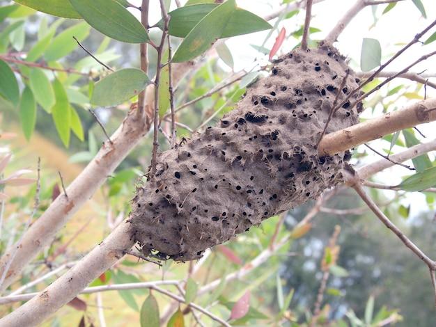 Mrówki gniazdują na drzewie