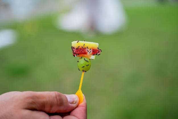 Mrówki jedzą jedzenie z bufetowego zbliżenia.