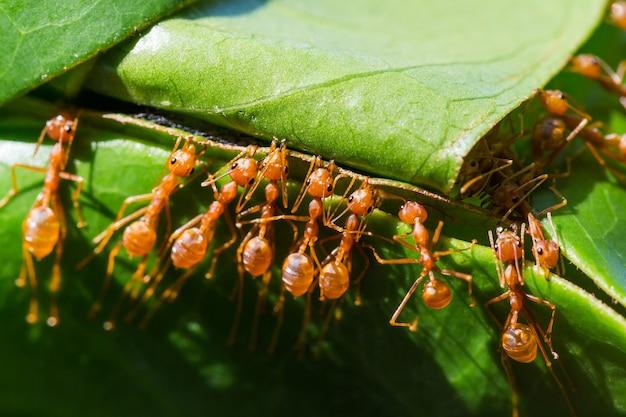 Mrówki pomagają w gniazdowaniu