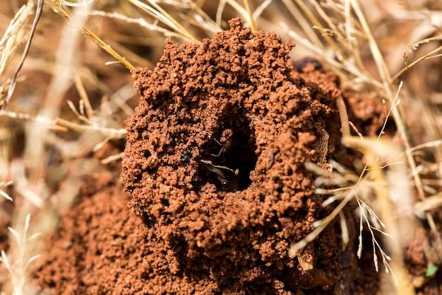 Mrówki w gnieździe