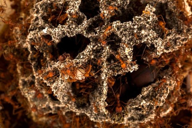 Mrówki w podziemnym gnieździe.