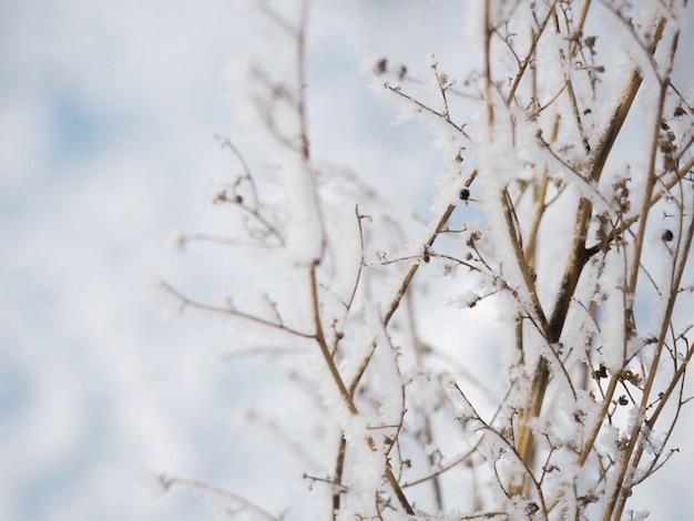 Mróz na gałęzi w mroźny dzień