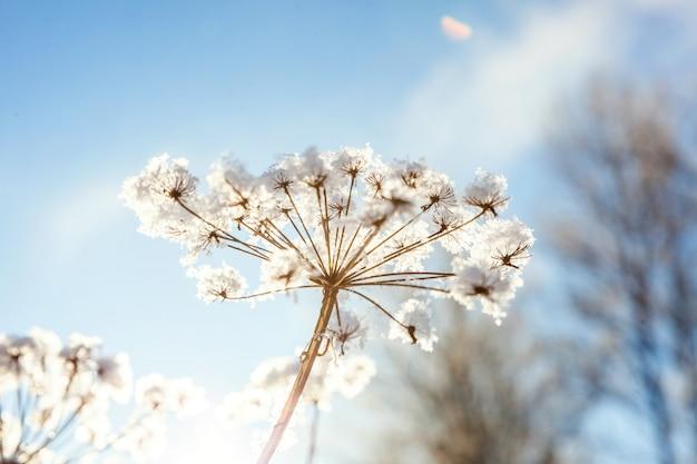 Mroźna trawa w śnieżnym lesie, zimna pogoda w słoneczny poranek