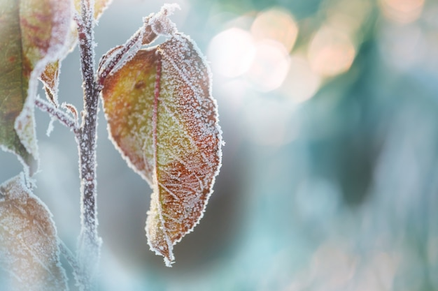 Mroźne liście w zimowym lesie.